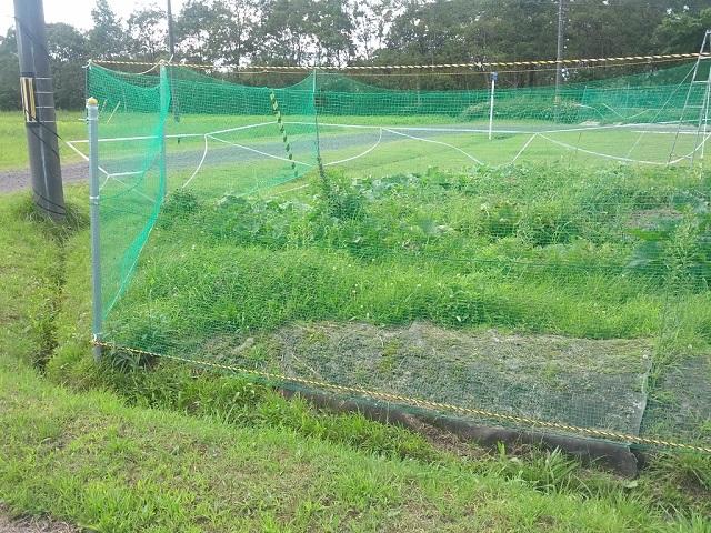 畑に防獣ネットを設置の写真