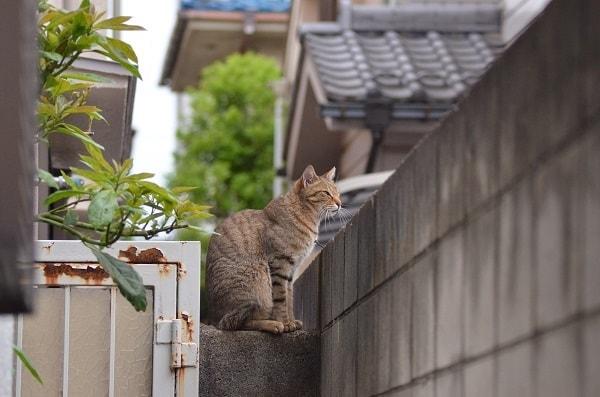 ブロック塀に佇む猫の写真