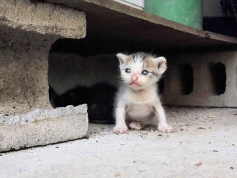 生後間もない子猫