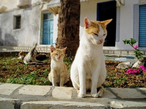 野良猫親子の写真