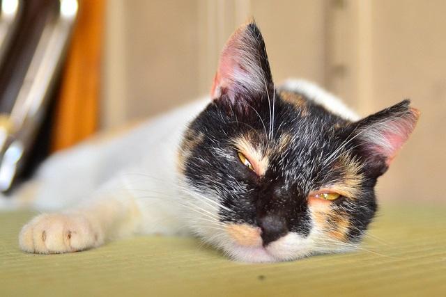 去勢・不妊済みの猫写真