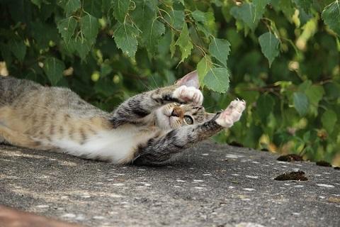 猫と葉っぱと戯れ