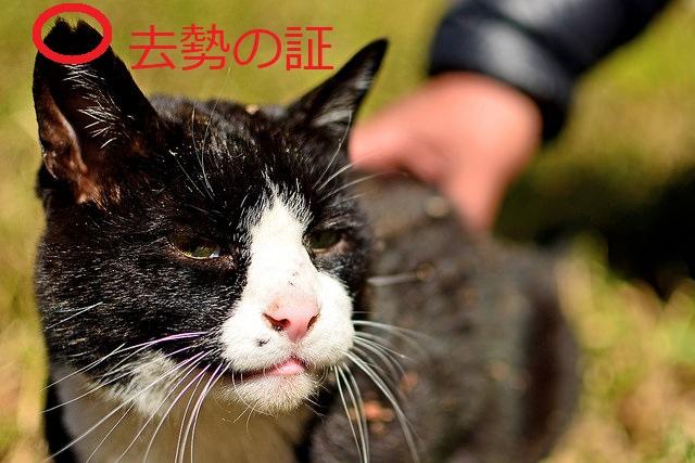 去勢された猫