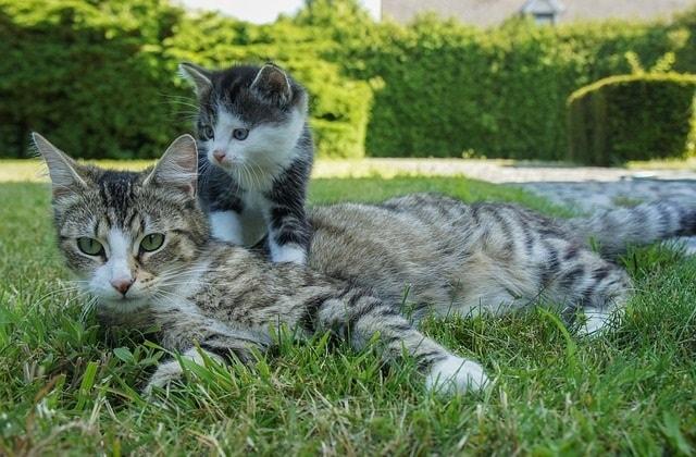 猫一家の怪しい絵