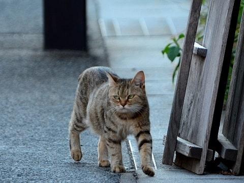 歩く野良猫、後をついてくる