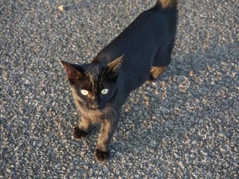 歩く野良猫、人は餌をくれる