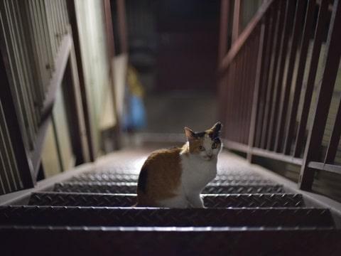 歩く野良猫、階段も上ります