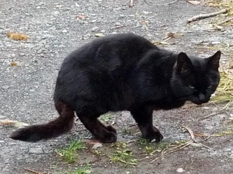 歩く野良猫、どこまでも