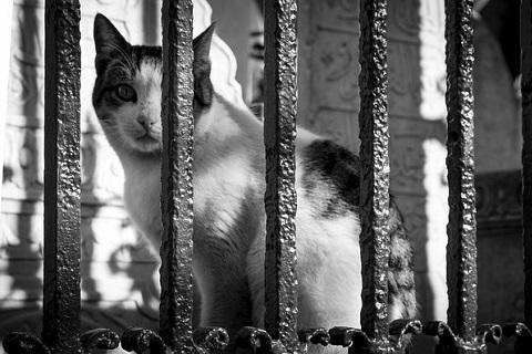 凝視する猫