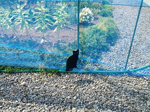 黒猫アイズで猫よけ