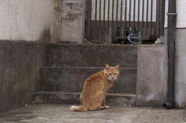 勝手口の前に佇む猫の写真
