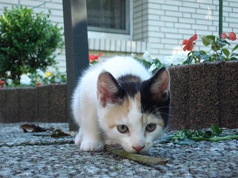 性格が異なる猫達。どんな猫が懐きやすいのか
