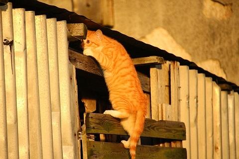 住処に戻る子猫