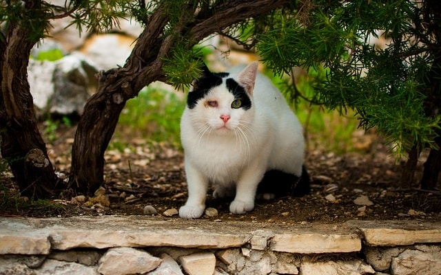行く猫来る猫