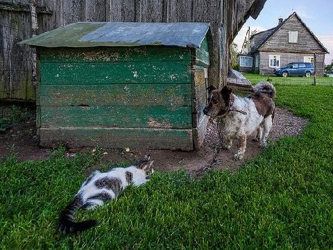犬小屋を襲う野良猫の写真