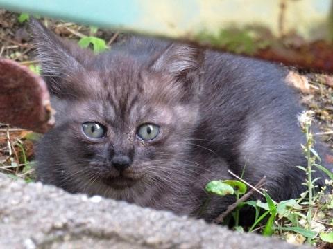 野良子猫の画像