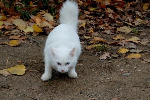 恐れる猫の写真