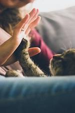猫と人の画像