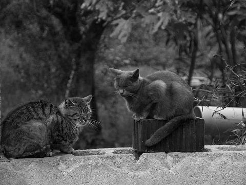 猫達の写真
