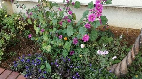 ゼラニウムと他の花