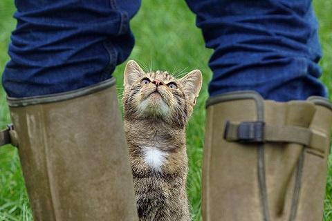 巨人を目の前にするネコの写真