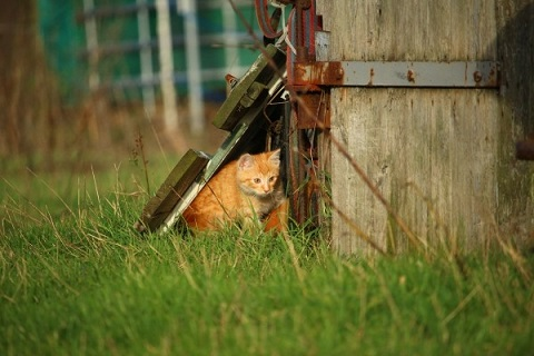 身を隠す猫の写真
