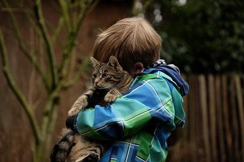 猫を抱き上げる写真
