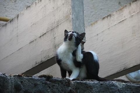 体がかゆい猫