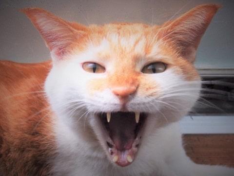 怒り猫の写真
