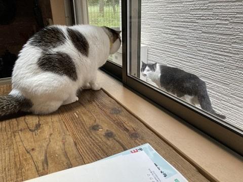 猫と猫の写真