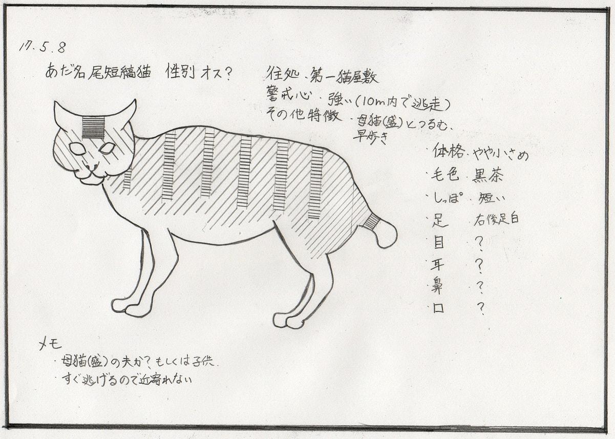 尾短縞猫絵