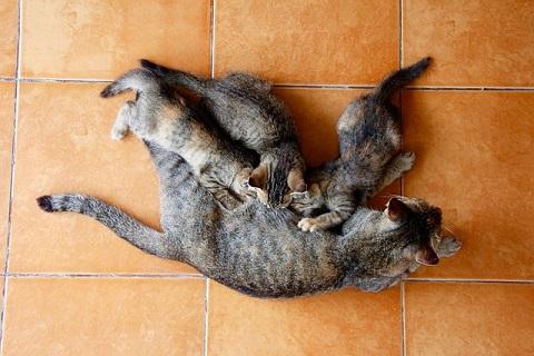 仔猫達の争い