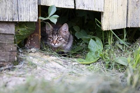 隠れる仔猫