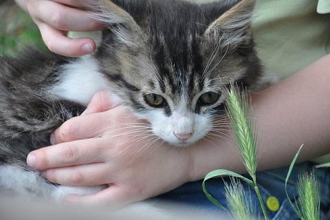 手の上の可愛らしい子猫