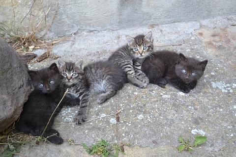 見つめる仔猫達