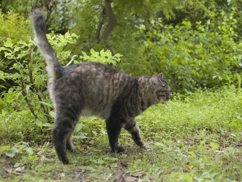 マーキングする猫