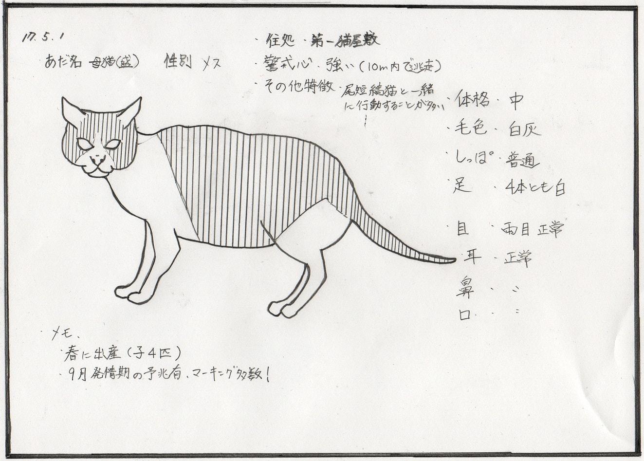 母猫(盛)絵