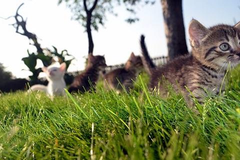 仔猫達の大移動