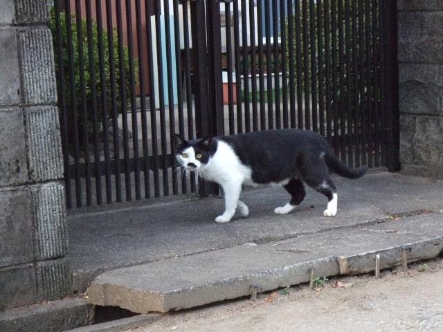 玄関に来る猫