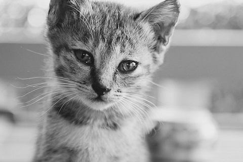 悲しむ猫達