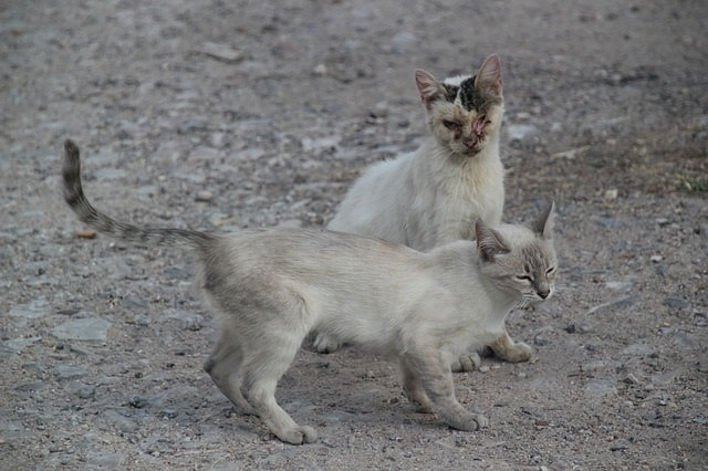 生粋の野良猫写真