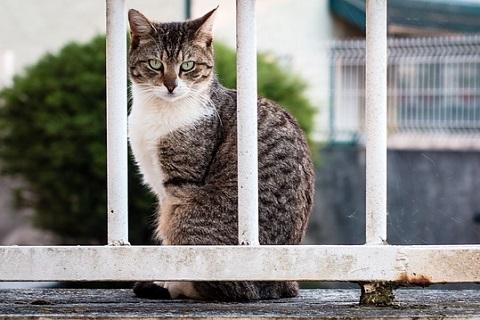 野良猫を勝手に捕まえていいものか