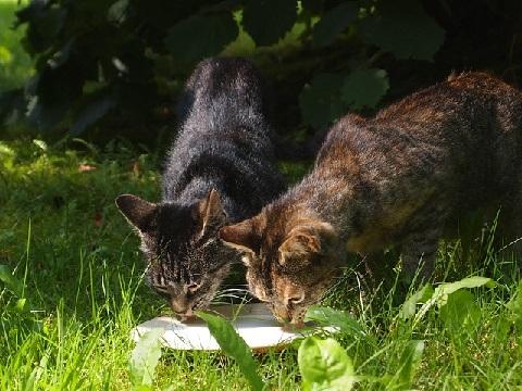 エサを食べる猫達