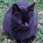 野良猫リラックス