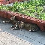 猫の避暑地の画像