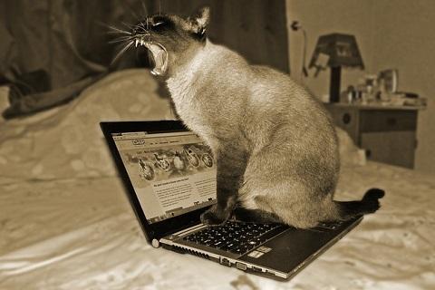 検索のジャマするネコ