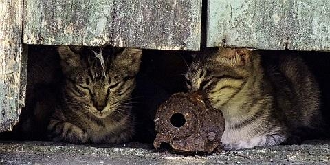 野良猫マイホーム
