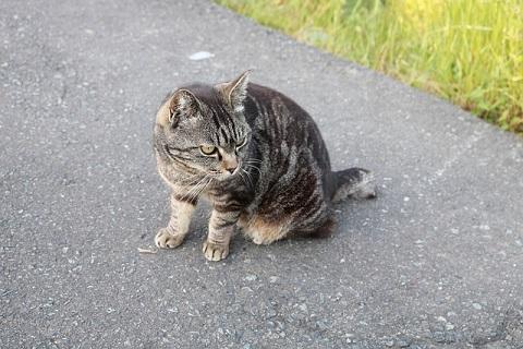 道路に座る猫