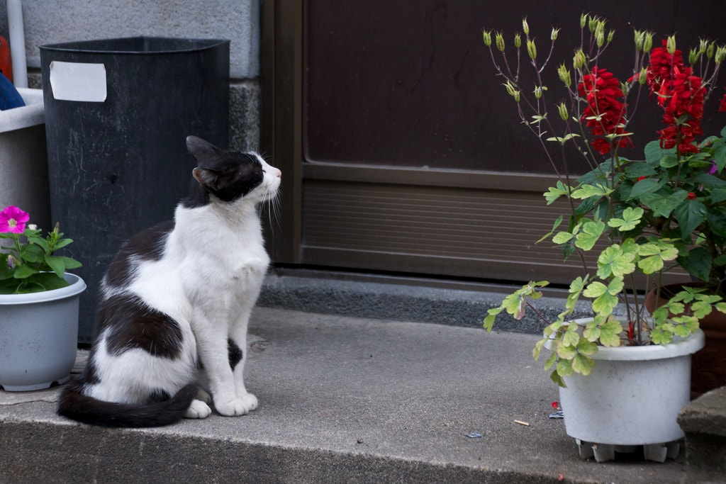 野良猫保護