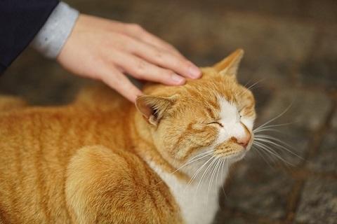 撫でられ猫